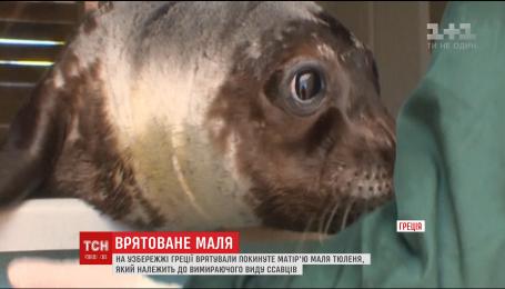 В Греции спасли брошенного мамой малыша тюленя