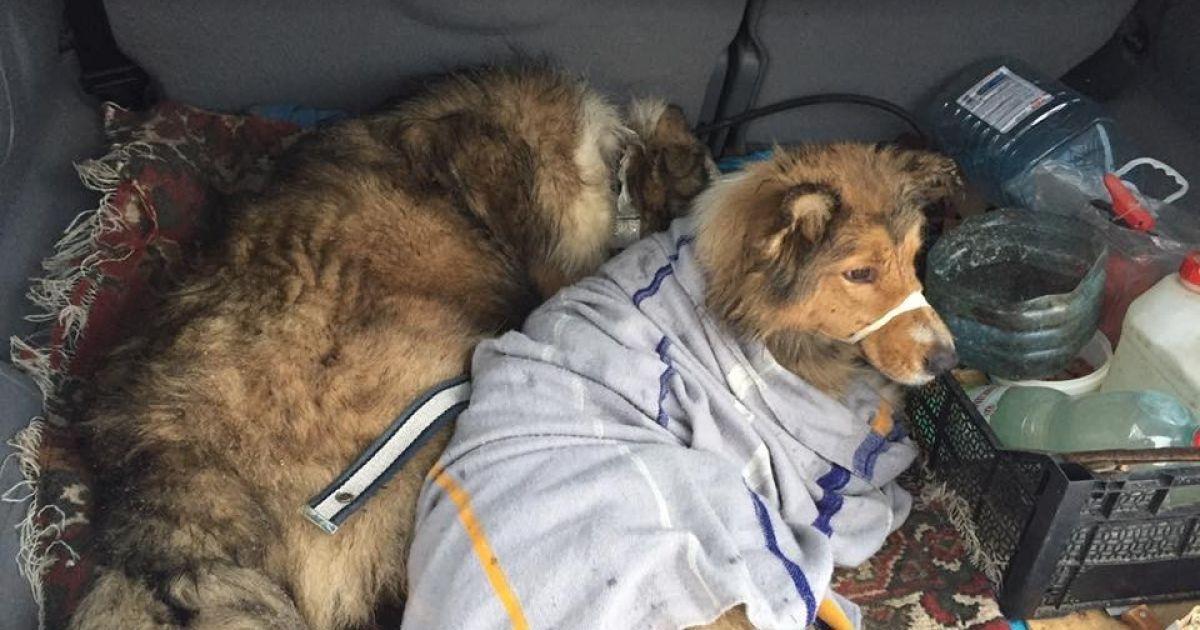 Обох собак врятували @ facebook.com/den.podolchak