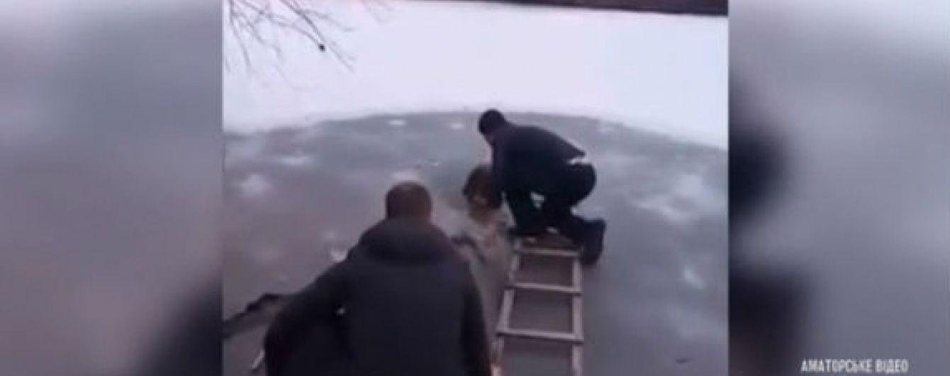 Дільничний на Київщині влаштував рятувальну операцію для вівчарки, яка замерзала в ополонці