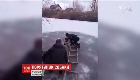 Операция по спасению четвероногого: в селе под Киевом спасли пса из ледяной воды