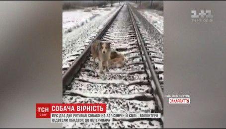 На Закарпатье двое суток подряд пес не отходил от раненой собаки, которая попала под поезд