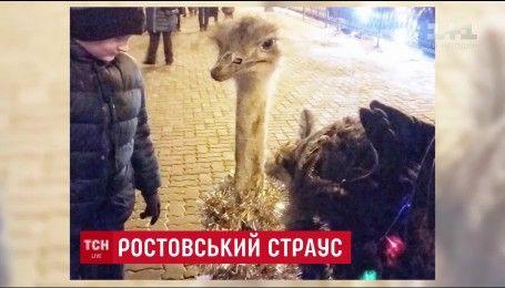 В Ростове мужчина вывел на прогулку страуса, украсив его новогодним дождиком и гирляндами