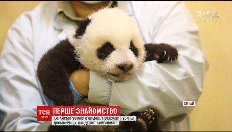 В зооцентре на юге Китая впервые познакомили с публикой маленьких пандочек-близнецов