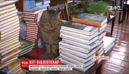 """За еду и тепло: на Хмельнитчине нашли кота, который десять лет """"работает"""" библиотекарем"""