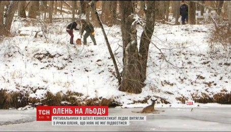 В штате Коннектикут оленя спасали из оледеневшей реки