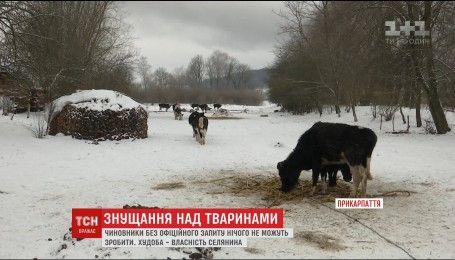 На Прикарпатье односельчане обвиняют мужчину в жестком обращении с животными