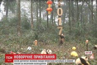 В Китае организовали новогодние поздравления от маленьких панд