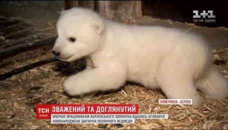 В зоопарке Берлина ветеринары впервые приблизились к новорожденному полярному медвежонку