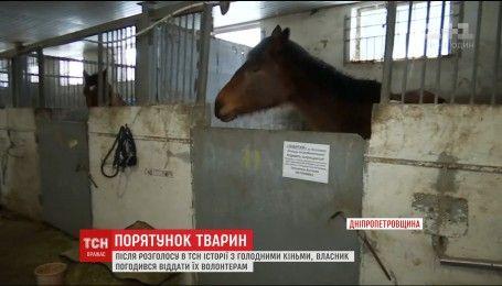 Волонтерам вдалося звільнити двох кобил, яких власник морив голодом на кінноспортивній базі