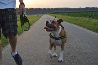 Более 100 уколов и 71 шов: на Донетчине домашняя собака едва не загрызла мужчину