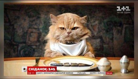 Чим годувати кота, аби у нього не було проблем зі здоров'ям