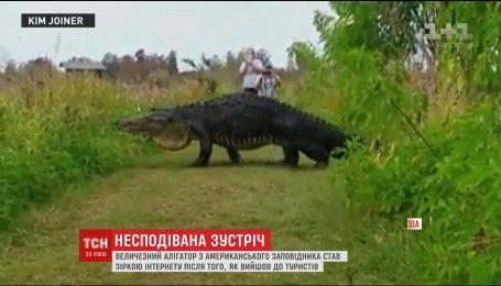 Несподівана зустріч з туристами: у США гігантський алігатор втік із заповідника