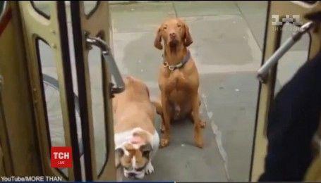 В Лондоні запустили перший автобусний тур для собак