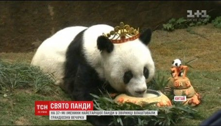 Самая старая в мире панда празднует день рождения в китайском зоопарке