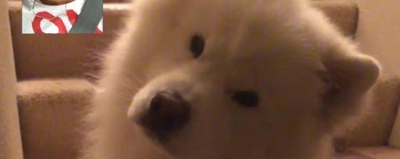 У Мережі юзерів зворушив собака, який зрадів своєму господарю, побачивши його у FaceTime