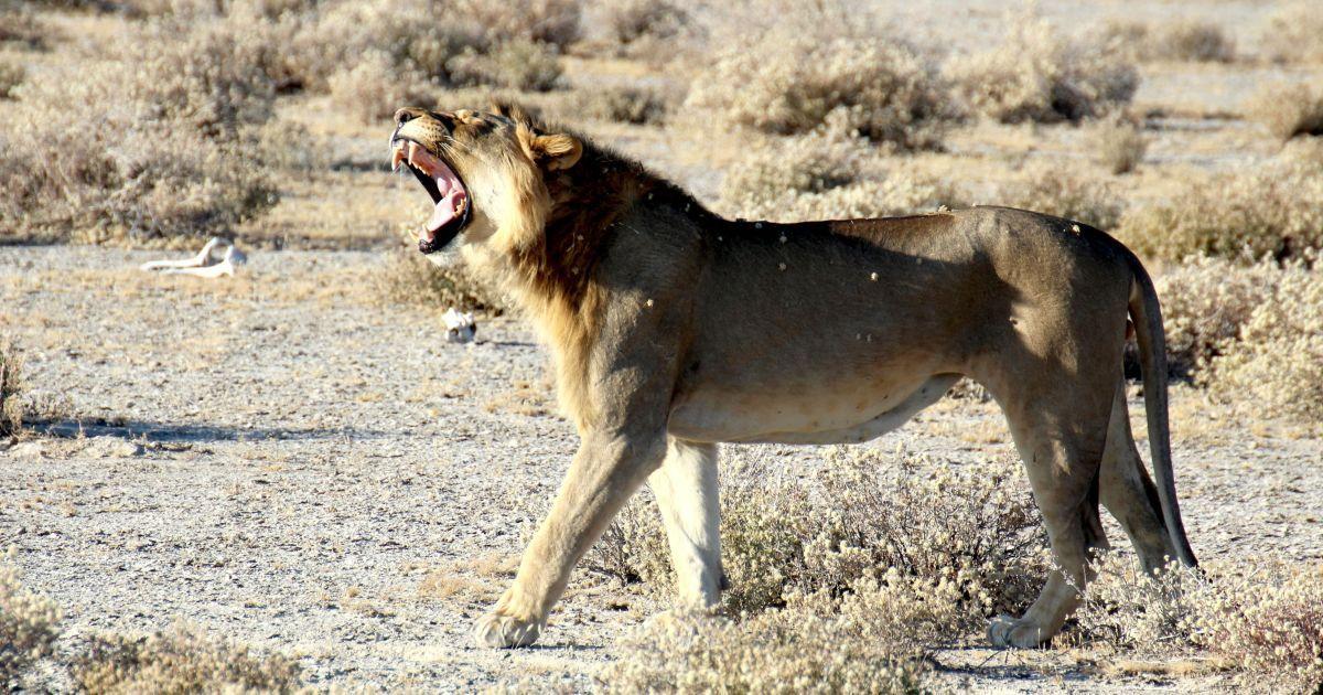 В Крыму животные растерзали сотрудника парка львов, бабушка погибшего рассказала ужасные подробности