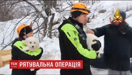 В Италии из-под лавины извлекли щенков и продолжают поиски десятков туристов и работников отеля