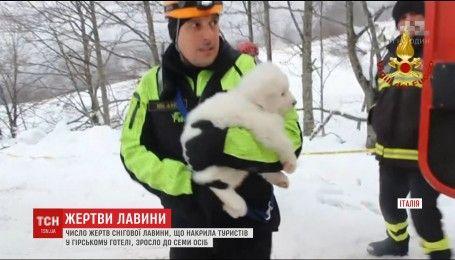 В Италии спасатели достали живыми трех щенков из-под заваленного лавиной отеля