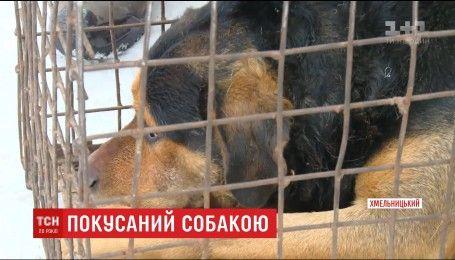 Медики в Хмельницком борются за жизнь гражданина Турции, которого покусала собака