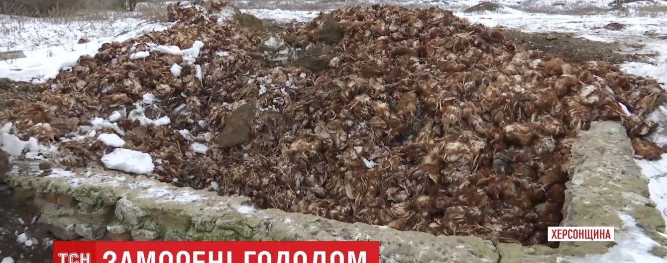 На Херсонщине фермерское хозяйство заморило голодом 80 тысяч кур