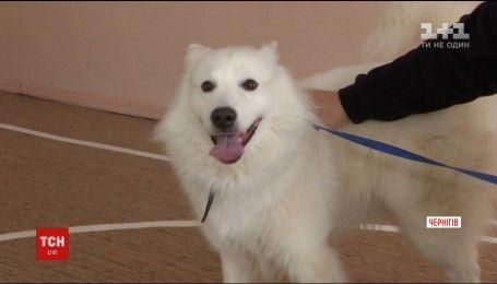 Незвичний іспит без права гавкнути: як у Чернігові визначали собак-лікарів