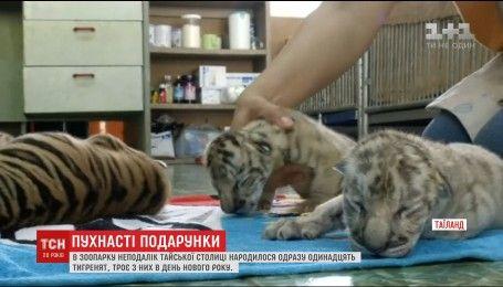 В Таиланде дали имена тигрятам, родившимся на китайский новый год