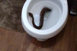 Мальчик из США нашел одну из самых опасных змей на планете в собственной уборной
