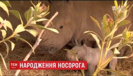 В ізраїльському зоопарку на світ з'явився рідкісний білий носоріг