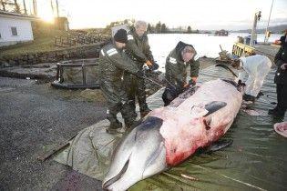 В Норвегии нашли мертвого кита с почти полусотней полиэтиленовых пакетов в желудке