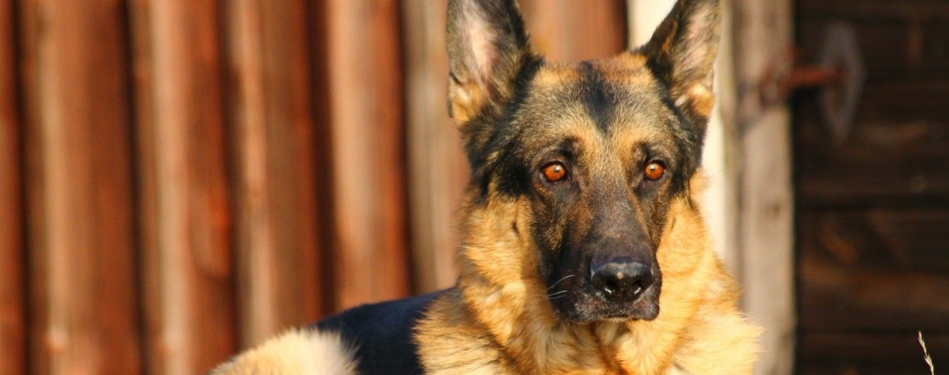 На Кировоградщине мужчина умер от бешенства из-за укуса домашней собаки