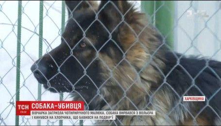 На Харківщині німецька вівчарка перегризла горло 4-річній дитині