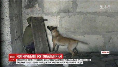 В Чернигове служебных собак учили искать пострадавших под завалами