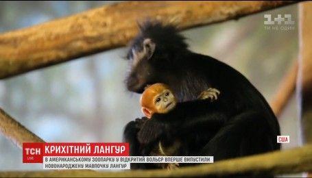 В американском зоопарке родилась крошечная редкая обезьянка
