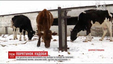 Волонтери та ветеринари обурені умовами життя корів на Дніпропетровщині