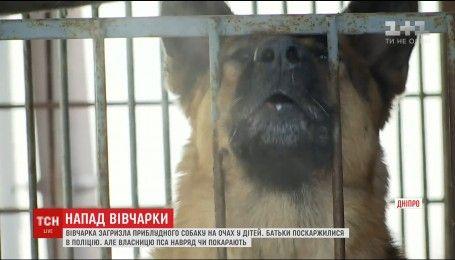 В Днепре овчарка без намордника загрызла бездомную собаку на глазах у детей