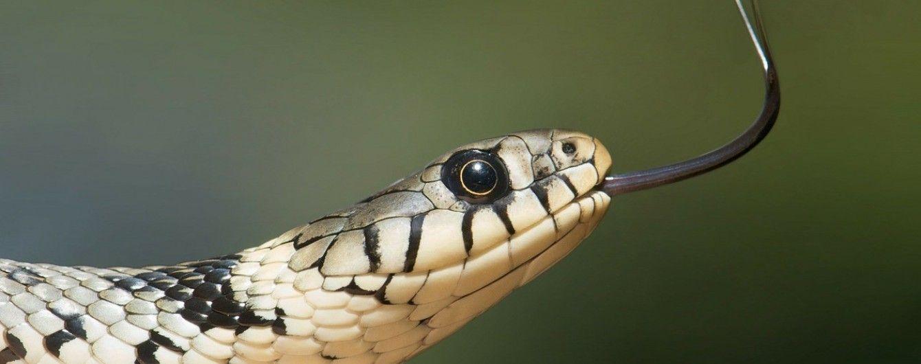 На Прикарпатье мужчину увезли в реанимацию после укуса змеи