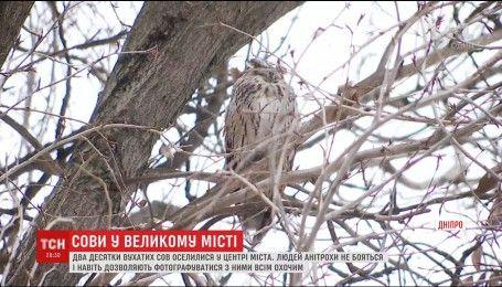 Орнітологів здивувала поведінка вухатих сов у центрі Дніпра
