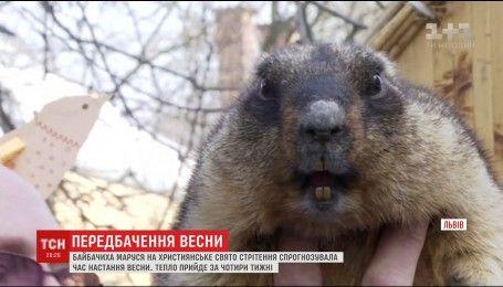 У Львові бабак напрогнозував ранній прихід тепла
