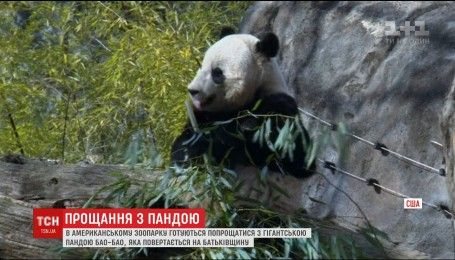 С вашингтонского зоопарка панду возвращают в Китай