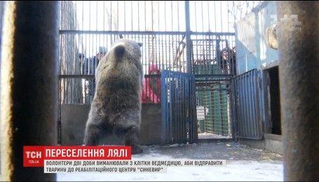 Волонтеры двое суток уговаривали медведицу выйти из клетки навстречу новой жизни