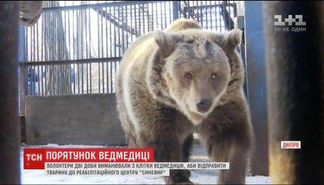 """Медведицу с Днепра транспортировали в реабилитационный центр """"Синевир"""""""