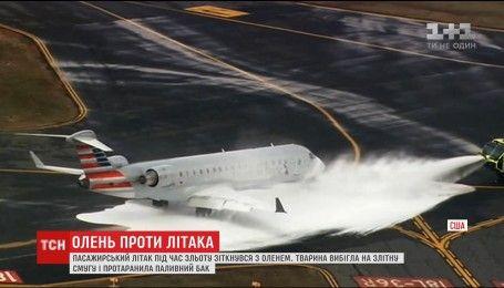 В американском аэропорту пассажирский самолет сбил оленя