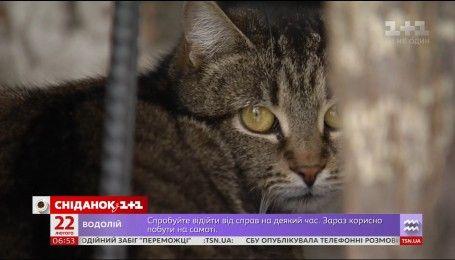Київські коти стали повноправними мешканцями міста