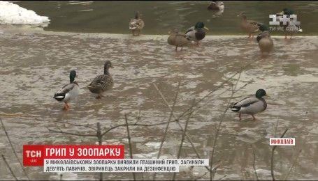 В Николаевском зоопарке обнаружили смертельный вирус птичьего гриппа