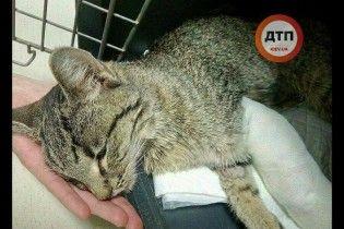 Померла кішка, яку викинули з вікна слідом за хлопчиком на столичних Осокорках