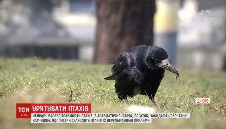 Відстрілюють та закидують камінням: у Дніпрі масово травмують птахів