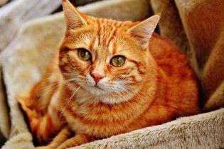 В Киеве вынесли приговор живодеру, который привязывал к дереву кота и бил его шлангом