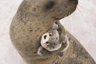 """""""Мимимишность зашкаливает"""": тюлень, обнимающий игрушечного тюленя, растрогал юзеров"""