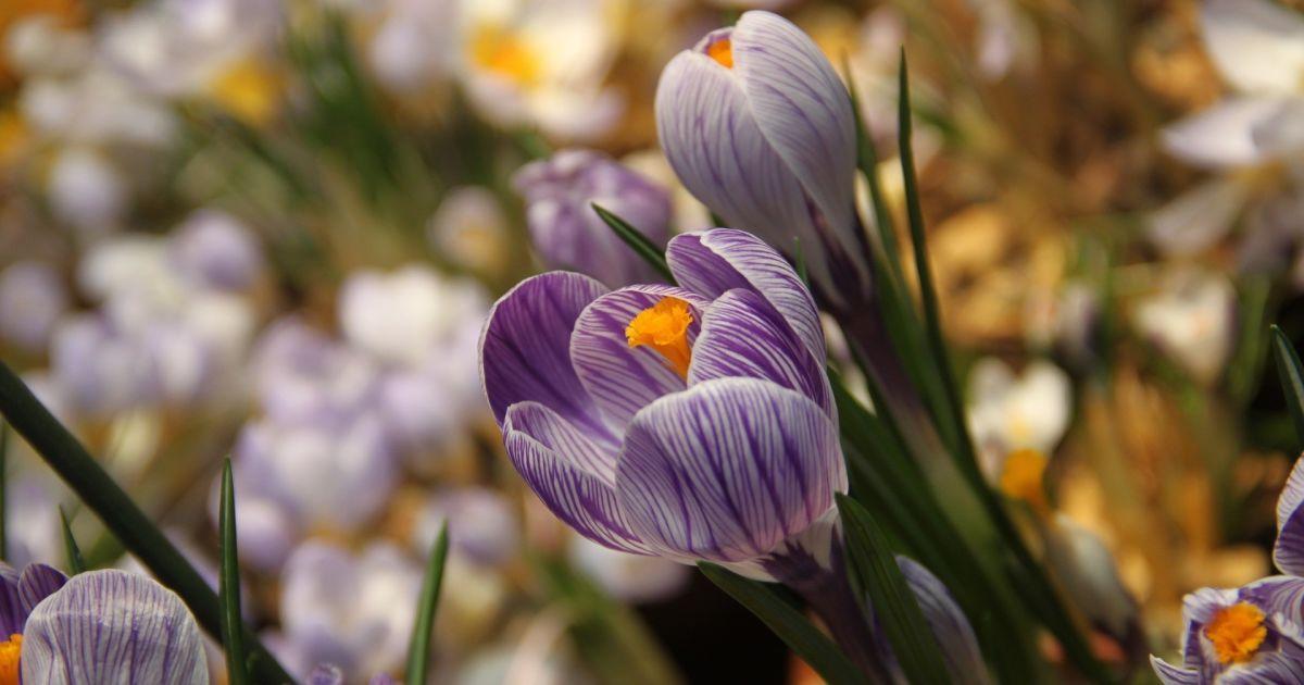 Привітання з 8 Березня: гарні листівки та поздоровлення своїми словами і у віршах