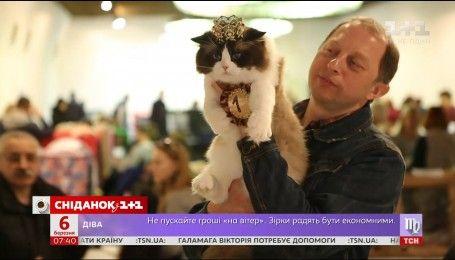 У Києві обрали найгарнішого кота